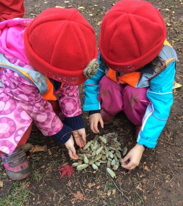 Nature Kindergarten Facilitator Demonstration Project Updates